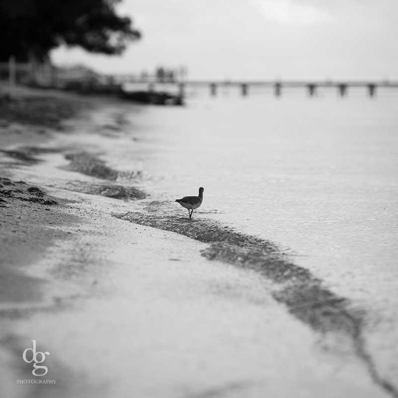 Anna Maria Island 2016