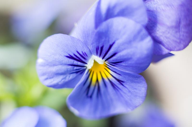 Viola -Yesterday, Today & Tomorrow