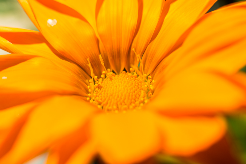Canon Macro Extension Tube Flower Photography – Summer Flowers